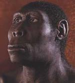 Homo_erectus_176